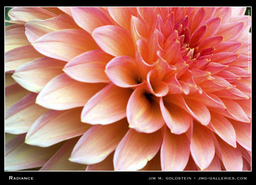 Radiance, dahlia macro photo by Jim M. Goldstein